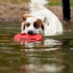Dans ses accessoires pour chien, Maxi Zoo n'oublie pas les jouets !
